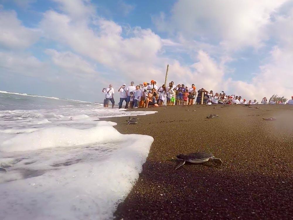 liberacion-de-tortugas-marinas-2