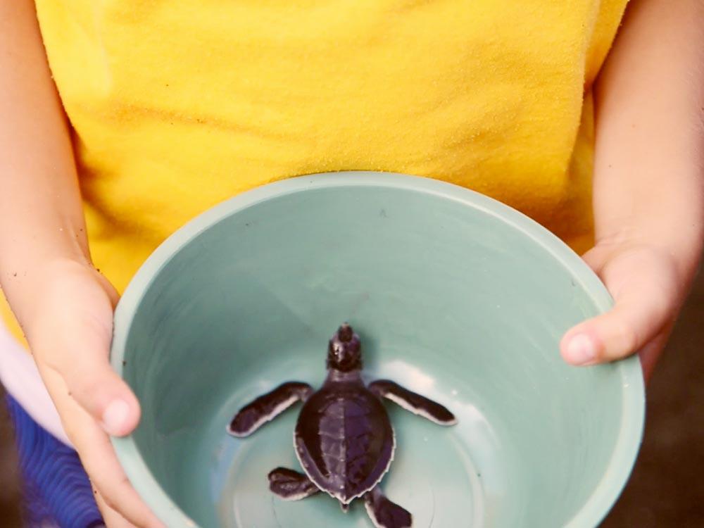 liberacion-de-tortugas-marinas-3